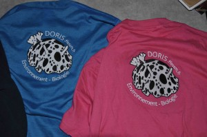 Brod-DORIS-sur-Bleu-Rose